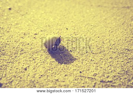 hermit crab on sand beach vintage sea
