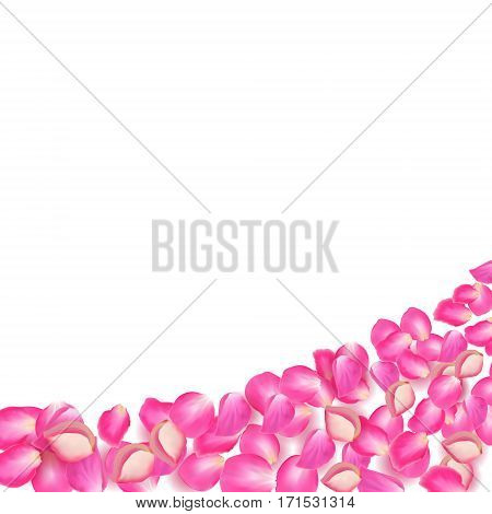Gone with the Wind rose petals. Realistic vector pink petals on white background.