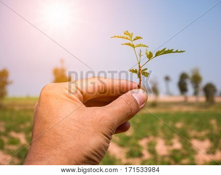 Young plant in hand with colorful sunlight and sky.