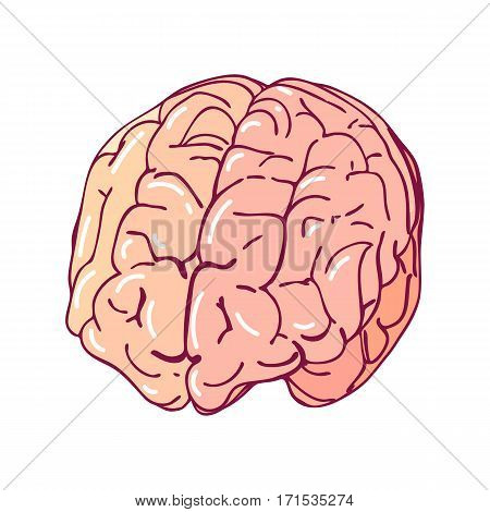 Vector brain, isolated on a white background. Cartoon style medicine illustration. Part of the human body.