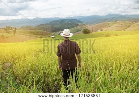 Farmer going out to do in the morning at rice field terraces.