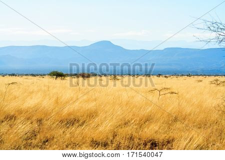 A view of African Savannah blue sky and yellow field