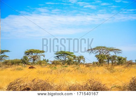 A view of African Savannah with trees in the far