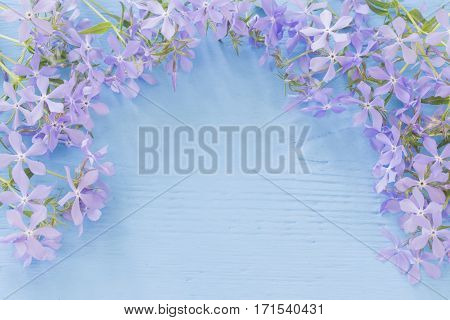 the spring flowers on a blue wooden background