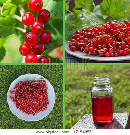 Collage of colorful red currant in summer.