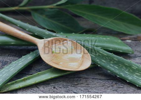 Aloe Herbs have many benefits. background, beauty, body, botanical, botany, cactus