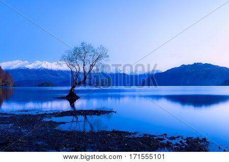 A lone tree pokes out of the still surface of Lake Wanaka near the town of Wanaka in the south island of New Zealand. - Lone tree Wanaka.