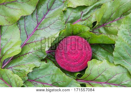 Fresh raw beetroot with leaves. top view