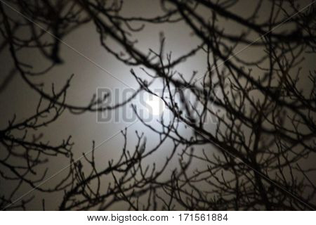 Full moon shining through clouds and trees. Defocused blurred abstract background