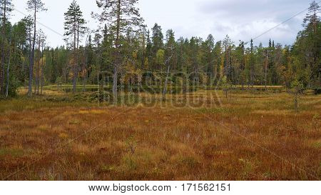Forest, meadow and swamp in finnish Oulanka national park