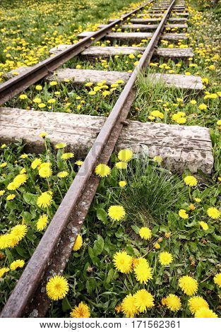 Plenty of dandelions by the unused railway track