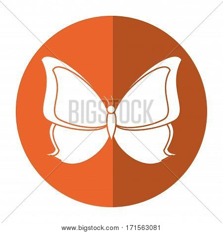 butterfly animal insect fly shadow vector illustration eps 10