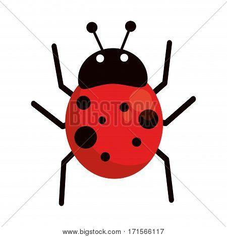 ladybug fly antenna animal vector illustration eps 10