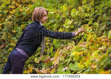 Beautiful woman picking blackberries in the woods