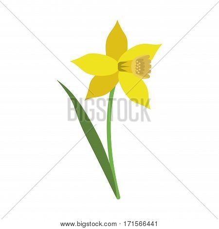 daffodil flower leaf bloom vector illustration eps 10