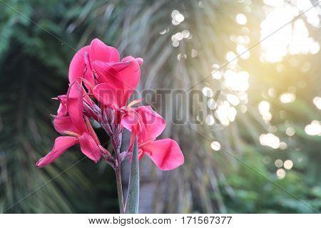 Beautiful Pink Flowers In The Morning Wayside Between Sidewalk Travel