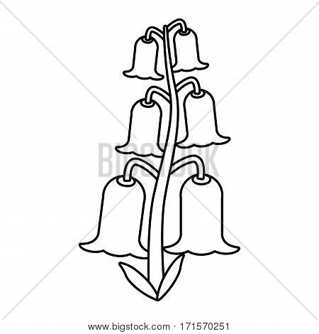 bell flowers flora botany thin line vector illustration eps 10