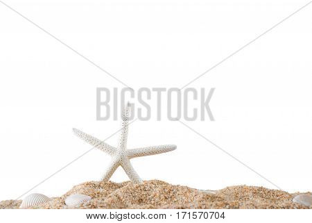 Starfish and shell on the sand beach with copy space summer and seashore concept Isolated on white background.