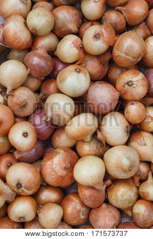 Organic farming background. Dirty onions fresh gathered on field at ecological farm, vegetable pattern. Harvest at agricultural production business. Natural healthy food outdoors