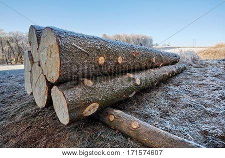 Frozen logs laying on winter frozen ground