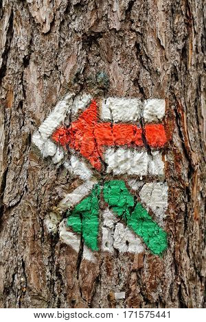 Red and green czech turist signs on the tree trunk