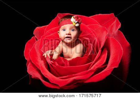 Portrait of cute baby girl, peeping out of rose, isolated on a black background