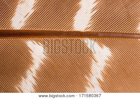 Brown bird feather pattern macro shot for backgrounds