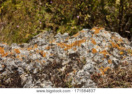 Gray stone with moss and red lichen
