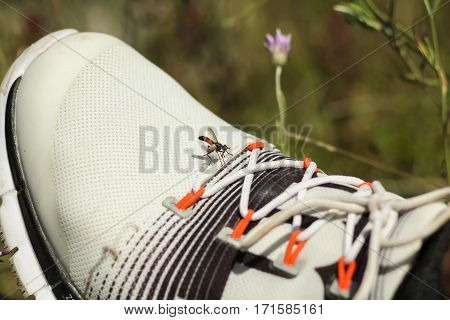 Little brown fly sit on the white sneaker