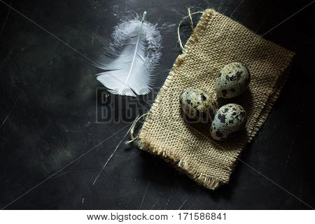 Quail eggs on burlap cloth white feather on black scratched concrete background top view aerial Easter concept minimalistic moody conceptual