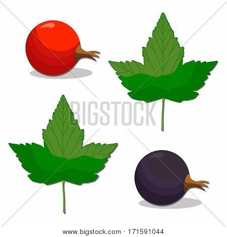 Vector illustration of logo for whole ripe berry red currant with green leaf