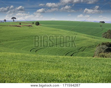 Rural Scene clouds nature non-urban farm agriculture landscape cultivated