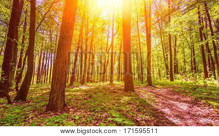 Beautiful Springtime Green Forest
