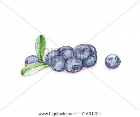 Hand drawn watercolor illustration of the food: some blueberries, isolated on the white background
