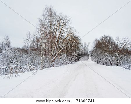 Road through snowy forest. The road cleared with a tractor for cars. Winter in Russia.