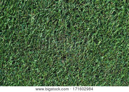 Trimmed hedge background texture