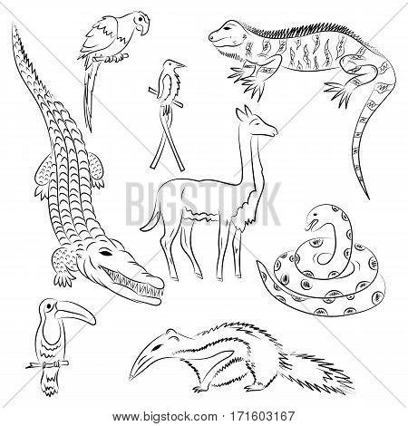 Hand Drawn Animals of South America. Doodle Drawings of Iguana Crocodile Parrot Ara Toucan HummingbirdAnaconda Anteater and llama. Sketch Style. Vector Illustration.