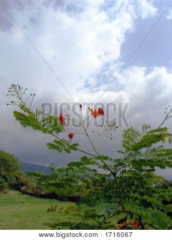 Flowersstormclouds