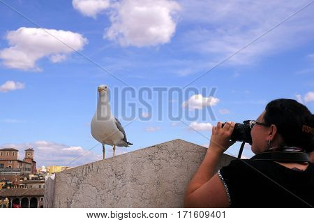 CAPITOLINE HILL, ROME, ITALY - MAY 1, 2014: Seagull and an unidentified photographer against the background of blue sky and the city