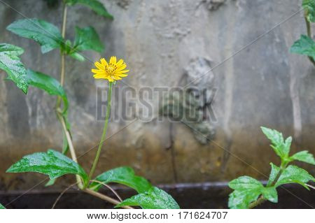 Yellow Flower On Background Of A Stone Wall