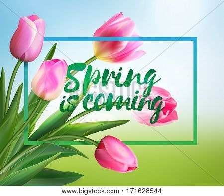 Spring is coming tulips flowers background with lettering. Template for greeting card with blooming tulip flowers. Vector illustration EPS10. Pink tulips on blurred spring meadow backdrop.