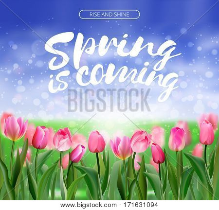 Spring is coming lettering on glade of pink tulips flowers background. Spring bright nature illustration. Vector EPS10.