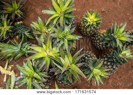 Multitude Of Pineapples In The Market
