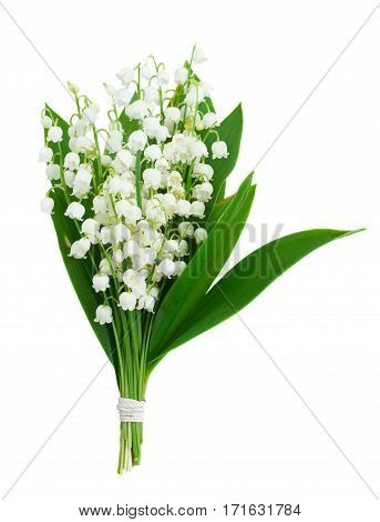 Lilly of the valley flowers and leaves bouquet isolated on white background