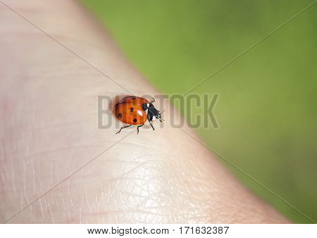 little red ladybug crawling on a human hand
