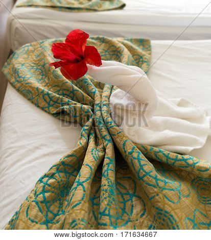 a peacock from the towel on the bed