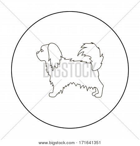 Pekingese vector illustration icon in outline design