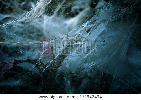 Close-up of a mysterious spider net. spider webs