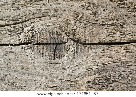 Texture with fissured knot from old wood.
