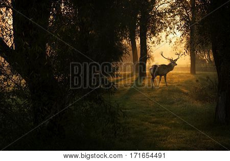 Amazing autumn forest and deer in sunrise